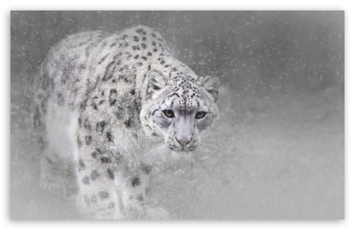 Snow Leopard ❤ 4K UHD Wallpaper for Wide 16:10 5:3 Widescreen WHXGA WQXGA WUXGA WXGA WGA ; 4K UHD 16:9 Ultra High Definition 2160p 1440p 1080p 900p 720p ; Standard 4:3 5:4 3:2 Fullscreen UXGA XGA SVGA QSXGA SXGA DVGA HVGA HQVGA ( Apple PowerBook G4 iPhone 4 3G 3GS iPod Touch ) ; Smartphone 16:9 3:2 5:3 2160p 1440p 1080p 900p 720p DVGA HVGA HQVGA ( Apple PowerBook G4 iPhone 4 3G 3GS iPod Touch ) WGA ; Tablet 1:1 ; iPad 1/2/Mini ; Mobile 4:3 5:3 3:2 16:9 5:4 - UXGA XGA SVGA WGA DVGA HVGA HQVGA ( Apple PowerBook G4 iPhone 4 3G 3GS iPod Touch ) 2160p 1440p 1080p 900p 720p QSXGA SXGA ;