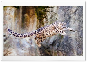Snow Leopard Flying HD Wide Wallpaper for Widescreen