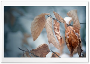 Snow On Dried Leaves HD Wide Wallpaper for Widescreen