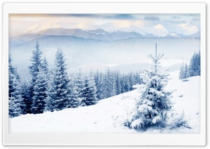 Snow On Fir Trees HD Wide Wallpaper for 4K UHD Widescreen desktop & smartphone