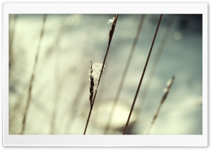 Snow On Grass Macro HD Wide Wallpaper for Widescreen