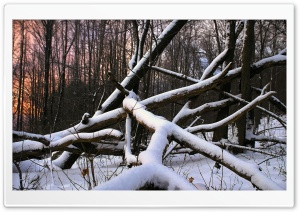 Snow Wood And Nature HD Wide Wallpaper for Widescreen