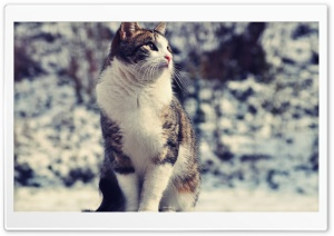 Snowcat HD Wide Wallpaper for Widescreen