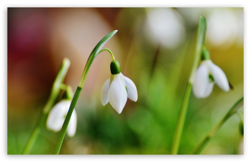 Snowdrop Bokeh ❤ 4K UHD Wallpaper for Wide 16:10 5:3 Widescreen WHXGA WQXGA WUXGA WXGA WGA ; 4K UHD 16:9 Ultra High Definition 2160p 1440p 1080p 900p 720p ; Standard 4:3 5:4 3:2 Fullscreen UXGA XGA SVGA QSXGA SXGA DVGA HVGA HQVGA ( Apple PowerBook G4 iPhone 4 3G 3GS iPod Touch ) ; Smartphone 5:3 WGA ; Tablet 1:1 ; iPad 1/2/Mini ; Mobile 4:3 5:3 3:2 16:9 5:4 - UXGA XGA SVGA WGA DVGA HVGA HQVGA ( Apple PowerBook G4 iPhone 4 3G 3GS iPod Touch ) 2160p 1440p 1080p 900p 720p QSXGA SXGA ; Dual 16:10 5:3 4:3 5:4 WHXGA WQXGA WUXGA WXGA WGA UXGA XGA SVGA QSXGA SXGA ;