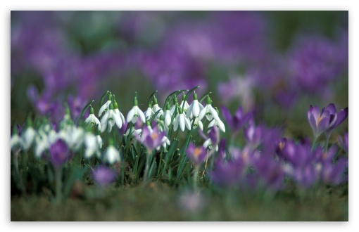 Snowdrops And Crocuses HD wallpaper for Wide 16:10 5:3 Widescreen WHXGA WQXGA WUXGA WXGA WGA ; HD 16:9 High Definition WQHD QWXGA 1080p 900p 720p QHD nHD ; UHD 16:9 WQHD QWXGA 1080p 900p 720p QHD nHD ; Standard 4:3 5:4 3:2 Fullscreen UXGA XGA SVGA QSXGA SXGA DVGA HVGA HQVGA devices ( Apple PowerBook G4 iPhone 4 3G 3GS iPod Touch ) ; Tablet 1:1 ; iPad 1/2/Mini ; Mobile 4:3 5:3 3:2 16:9 5:4 - UXGA XGA SVGA WGA DVGA HVGA HQVGA devices ( Apple PowerBook G4 iPhone 4 3G 3GS iPod Touch ) WQHD QWXGA 1080p 900p 720p QHD nHD QSXGA SXGA ; Dual 16:10 5:3 16:9 4:3 5:4 WHXGA WQXGA WUXGA WXGA WGA WQHD QWXGA 1080p 900p 720p QHD nHD UXGA XGA SVGA QSXGA SXGA ;