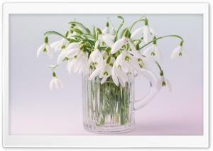Snowdrops Bouquet HD Wide Wallpaper for Widescreen
