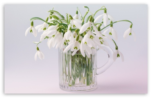 Snowdrops Bouquet ❤ 4K UHD Wallpaper for Wide 16:10 5:3 Widescreen WHXGA WQXGA WUXGA WXGA WGA ; 4K UHD 16:9 Ultra High Definition 2160p 1440p 1080p 900p 720p ; Standard 4:3 5:4 3:2 Fullscreen UXGA XGA SVGA QSXGA SXGA DVGA HVGA HQVGA ( Apple PowerBook G4 iPhone 4 3G 3GS iPod Touch ) ; Tablet 1:1 ; iPad 1/2/Mini ; Mobile 4:3 5:3 3:2 16:9 5:4 - UXGA XGA SVGA WGA DVGA HVGA HQVGA ( Apple PowerBook G4 iPhone 4 3G 3GS iPod Touch ) 2160p 1440p 1080p 900p 720p QSXGA SXGA ;