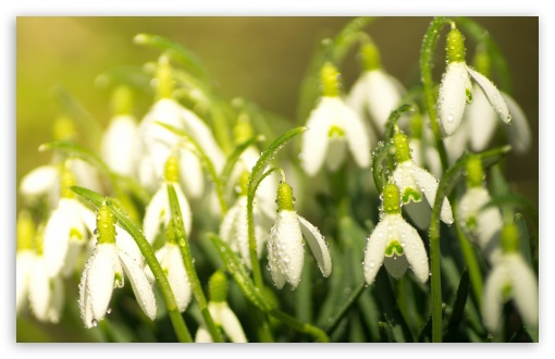 Snowdrops Spring ❤ 4K UHD Wallpaper for Wide 16:10 5:3 Widescreen WHXGA WQXGA WUXGA WXGA WGA ; 4K UHD 16:9 Ultra High Definition 2160p 1440p 1080p 900p 720p ; Standard 4:3 5:4 3:2 Fullscreen UXGA XGA SVGA QSXGA SXGA DVGA HVGA HQVGA ( Apple PowerBook G4 iPhone 4 3G 3GS iPod Touch ) ; Smartphone 5:3 WGA ; Tablet 1:1 ; iPad 1/2/Mini ; Mobile 4:3 5:3 3:2 16:9 5:4 - UXGA XGA SVGA WGA DVGA HVGA HQVGA ( Apple PowerBook G4 iPhone 4 3G 3GS iPod Touch ) 2160p 1440p 1080p 900p 720p QSXGA SXGA ; Dual 16:10 5:3 16:9 4:3 5:4 WHXGA WQXGA WUXGA WXGA WGA 2160p 1440p 1080p 900p 720p UXGA XGA SVGA QSXGA SXGA ;