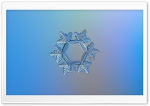 Snowflake Microscope Slides HD Wide Wallpaper for Widescreen