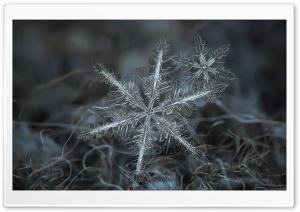 Snowflakes Macro HD Wide Wallpaper for Widescreen