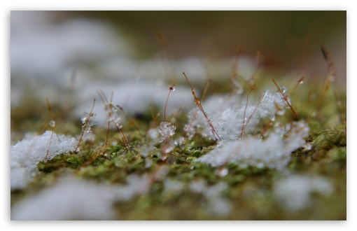 Snowflakes On Moss HD wallpaper for Wide 16:10 5:3 Widescreen WHXGA WQXGA WUXGA WXGA WGA ; HD 16:9 High Definition WQHD QWXGA 1080p 900p 720p QHD nHD ; Standard 4:3 5:4 3:2 Fullscreen UXGA XGA SVGA QSXGA SXGA DVGA HVGA HQVGA devices ( Apple PowerBook G4 iPhone 4 3G 3GS iPod Touch ) ; Tablet 1:1 ; iPad 1/2/Mini ; Mobile 4:3 5:3 3:2 16:9 5:4 - UXGA XGA SVGA WGA DVGA HVGA HQVGA devices ( Apple PowerBook G4 iPhone 4 3G 3GS iPod Touch ) WQHD QWXGA 1080p 900p 720p QHD nHD QSXGA SXGA ; Dual 16:10 5:3 16:9 4:3 5:4 WHXGA WQXGA WUXGA WXGA WGA WQHD QWXGA 1080p 900p 720p QHD nHD UXGA XGA SVGA QSXGA SXGA ;