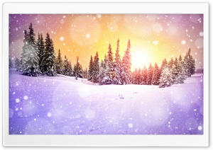 Snowing Bokeh HD Wide Wallpaper for Widescreen