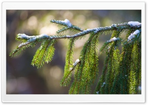 Snowy Branch HD Wide Wallpaper for Widescreen