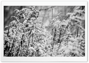 Snowy Bushes, Black White HD Wide Wallpaper for Widescreen