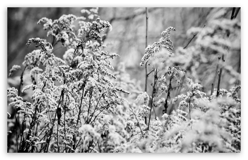 Snowy Bushes, Black White ❤ 4K UHD Wallpaper for Wide 16:10 5:3 Widescreen WHXGA WQXGA WUXGA WXGA WGA ; 4K UHD 16:9 Ultra High Definition 2160p 1440p 1080p 900p 720p ; Standard 4:3 5:4 3:2 Fullscreen UXGA XGA SVGA QSXGA SXGA DVGA HVGA HQVGA ( Apple PowerBook G4 iPhone 4 3G 3GS iPod Touch ) ; Tablet 1:1 ; iPad 1/2/Mini ; Mobile 4:3 5:3 3:2 16:9 5:4 - UXGA XGA SVGA WGA DVGA HVGA HQVGA ( Apple PowerBook G4 iPhone 4 3G 3GS iPod Touch ) 2160p 1440p 1080p 900p 720p QSXGA SXGA ; Dual 16:10 5:3 16:9 4:3 5:4 WHXGA WQXGA WUXGA WXGA WGA 2160p 1440p 1080p 900p 720p UXGA XGA SVGA QSXGA SXGA ;