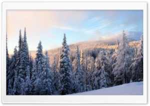 Snowy Fir Tree Forest HD Wide Wallpaper for Widescreen
