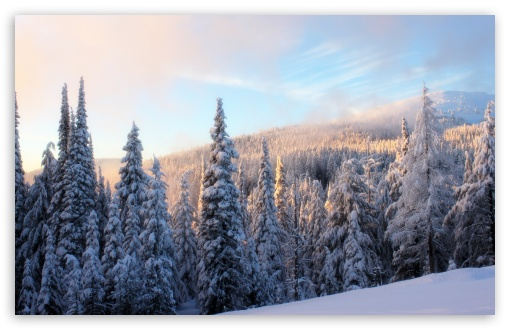 Snowy Fir Tree Forest HD wallpaper for Wide 16:10 5:3 Widescreen WHXGA WQXGA WUXGA WXGA WGA ; HD 16:9 High Definition WQHD QWXGA 1080p 900p 720p QHD nHD ; UHD 16:9 WQHD QWXGA 1080p 900p 720p QHD nHD ; Standard 4:3 5:4 3:2 Fullscreen UXGA XGA SVGA QSXGA SXGA DVGA HVGA HQVGA devices ( Apple PowerBook G4 iPhone 4 3G 3GS iPod Touch ) ; Tablet 1:1 ; iPad 1/2/Mini ; Mobile 4:3 5:3 3:2 16:9 5:4 - UXGA XGA SVGA WGA DVGA HVGA HQVGA devices ( Apple PowerBook G4 iPhone 4 3G 3GS iPod Touch ) WQHD QWXGA 1080p 900p 720p QHD nHD QSXGA SXGA ;