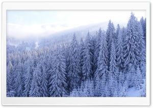 Snowy Fir Trees Forest HD Wide Wallpaper for Widescreen