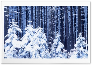 Snowy Forest HD Wide Wallpaper for Widescreen
