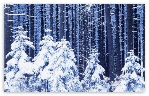 Snowy Forest HD wallpaper for Wide 16:10 5:3 Widescreen WHXGA WQXGA WUXGA WXGA WGA ; HD 16:9 High Definition WQHD QWXGA 1080p 900p 720p QHD nHD ; Standard 4:3 5:4 3:2 Fullscreen UXGA XGA SVGA QSXGA SXGA DVGA HVGA HQVGA devices ( Apple PowerBook G4 iPhone 4 3G 3GS iPod Touch ) ; Tablet 1:1 ; iPad 1/2/Mini ; Mobile 4:3 5:3 3:2 16:9 5:4 - UXGA XGA SVGA WGA DVGA HVGA HQVGA devices ( Apple PowerBook G4 iPhone 4 3G 3GS iPod Touch ) WQHD QWXGA 1080p 900p 720p QHD nHD QSXGA SXGA ;