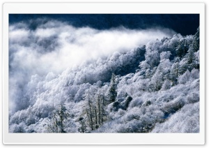 Snowy Forest Scene HD Wide Wallpaper for Widescreen