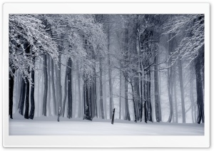 Snowy Forest, Winter HD Wide Wallpaper for 4K UHD Widescreen desktop & smartphone