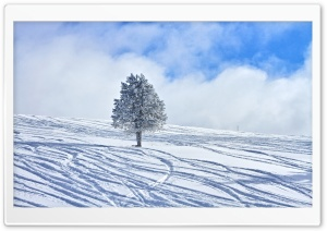 Snowy Lone Tree HD Wide Wallpaper for Widescreen