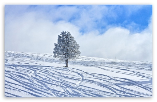 Snowy Lone Tree ❤ 4K UHD Wallpaper for Wide 16:10 5:3 Widescreen WHXGA WQXGA WUXGA WXGA WGA ; 4K UHD 16:9 Ultra High Definition 2160p 1440p 1080p 900p 720p ; Standard 4:3 5:4 3:2 Fullscreen UXGA XGA SVGA QSXGA SXGA DVGA HVGA HQVGA ( Apple PowerBook G4 iPhone 4 3G 3GS iPod Touch ) ; Tablet 1:1 ; iPad 1/2/Mini ; Mobile 4:3 5:3 3:2 16:9 5:4 - UXGA XGA SVGA WGA DVGA HVGA HQVGA ( Apple PowerBook G4 iPhone 4 3G 3GS iPod Touch ) 2160p 1440p 1080p 900p 720p QSXGA SXGA ; Dual 16:10 5:3 4:3 5:4 WHXGA WQXGA WUXGA WXGA WGA UXGA XGA SVGA QSXGA SXGA ;