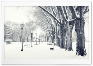 Snowy Park HD Wide Wallpaper for Widescreen