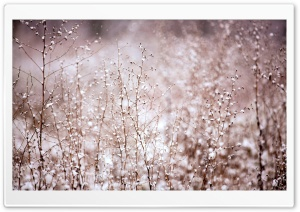 Snowy Plants HD Wide Wallpaper for Widescreen