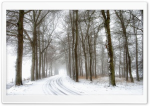 Snowy Road and Trees, Winter HD Wide Wallpaper for Widescreen