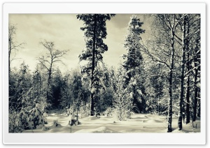 Snowy Scene HD Wide Wallpaper for Widescreen