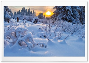 Snowy Season HD Wide Wallpaper for Widescreen