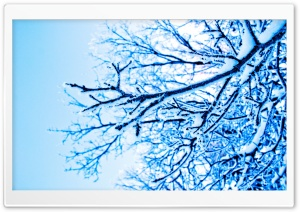 Snowy Tree HD Wide Wallpaper for Widescreen
