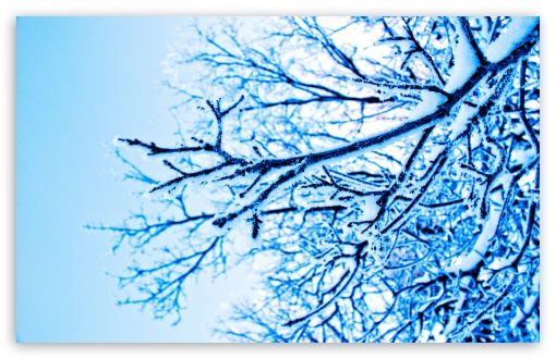 Snowy Tree HD wallpaper for Standard 4:3 5:4 Fullscreen UXGA XGA SVGA QSXGA SXGA ; Wide 16:10 5:3 Widescreen WHXGA WQXGA WUXGA WXGA WGA ; HD 16:9 High Definition WQHD QWXGA 1080p 900p 720p QHD nHD ; Other 3:2 DVGA HVGA HQVGA devices ( Apple PowerBook G4 iPhone 4 3G 3GS iPod Touch ) ; Mobile VGA WVGA iPhone iPad PSP Phone - VGA QVGA Smartphone ( PocketPC GPS iPod Zune BlackBerry HTC Samsung LG Nokia Eten Asus ) WVGA WQVGA Smartphone ( HTC Samsung Sony Ericsson LG Vertu MIO ) HVGA Smartphone ( Apple iPhone iPod BlackBerry HTC Samsung Nokia ) Sony PSP Zune HD Zen ; Tablet 2 Android ; Dual 4:3 5:4 UXGA XGA SVGA QSXGA SXGA ;