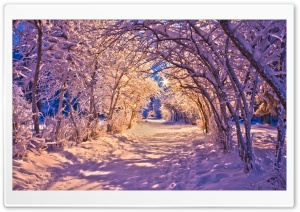 Snowy Tree Archway HD Wide Wallpaper for Widescreen