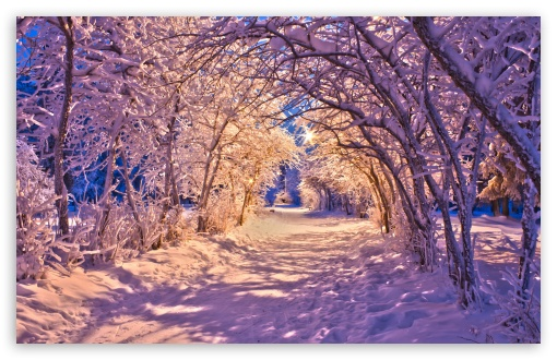 Snowy Tree Archway ❤ 4K UHD Wallpaper for Wide 16:10 5:3 Widescreen WHXGA WQXGA WUXGA WXGA WGA ; 4K UHD 16:9 Ultra High Definition 2160p 1440p 1080p 900p 720p ; Standard 4:3 5:4 3:2 Fullscreen UXGA XGA SVGA QSXGA SXGA DVGA HVGA HQVGA ( Apple PowerBook G4 iPhone 4 3G 3GS iPod Touch ) ; Tablet 1:1 ; iPad 1/2/Mini ; Mobile 4:3 5:3 3:2 16:9 5:4 - UXGA XGA SVGA WGA DVGA HVGA HQVGA ( Apple PowerBook G4 iPhone 4 3G 3GS iPod Touch ) 2160p 1440p 1080p 900p 720p QSXGA SXGA ;