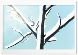 Snowy Tree Background HD Wide Wallpaper for Widescreen