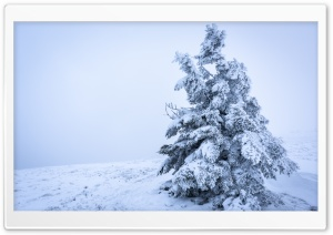 Snowy Tree Background Ultra HD Wallpaper for 4K UHD Widescreen desktop, tablet & smartphone