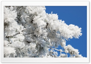 Snowy Tree Branch Blue Sky HD Wide Wallpaper for Widescreen