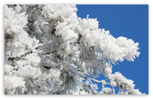 Snowy Tree Branch Blue Sky HD wallpaper for Wide 16:10 5:3 Widescreen WHXGA WQXGA WUXGA WXGA WGA ; HD 16:9 High Definition WQHD QWXGA 1080p 900p 720p QHD nHD ; UHD 16:9 WQHD QWXGA 1080p 900p 720p QHD nHD ; Standard 4:3 5:4 3:2 Fullscreen UXGA XGA SVGA QSXGA SXGA DVGA HVGA HQVGA devices ( Apple PowerBook G4 iPhone 4 3G 3GS iPod Touch ) ; Tablet 1:1 ; iPad 1/2/Mini ; Mobile 4:3 5:3 3:2 16:9 5:4 - UXGA XGA SVGA WGA DVGA HVGA HQVGA devices ( Apple PowerBook G4 iPhone 4 3G 3GS iPod Touch ) WQHD QWXGA 1080p 900p 720p QHD nHD QSXGA SXGA ; Dual 16:10 5:3 16:9 4:3 5:4 WHXGA WQXGA WUXGA WXGA WGA WQHD QWXGA 1080p 900p 720p QHD nHD UXGA XGA SVGA QSXGA SXGA ;