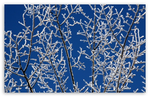 Snowy Tree Branches ❤ 4K UHD Wallpaper for Wide 16:10 5:3 Widescreen WHXGA WQXGA WUXGA WXGA WGA ; 4K UHD 16:9 Ultra High Definition 2160p 1440p 1080p 900p 720p ; Standard 4:3 5:4 3:2 Fullscreen UXGA XGA SVGA QSXGA SXGA DVGA HVGA HQVGA ( Apple PowerBook G4 iPhone 4 3G 3GS iPod Touch ) ; Tablet 1:1 ; iPad 1/2/Mini ; Mobile 4:3 5:3 3:2 16:9 5:4 - UXGA XGA SVGA WGA DVGA HVGA HQVGA ( Apple PowerBook G4 iPhone 4 3G 3GS iPod Touch ) 2160p 1440p 1080p 900p 720p QSXGA SXGA ;