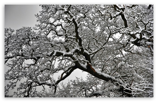 Snowy Tree Branches ❤ 4K UHD Wallpaper for Wide 16:10 5:3 Widescreen WHXGA WQXGA WUXGA WXGA WGA ; UltraWide 21:9 24:10 ; 4K UHD 16:9 Ultra High Definition 2160p 1440p 1080p 900p 720p ; UHD 16:9 2160p 1440p 1080p 900p 720p ; Standard 4:3 5:4 3:2 Fullscreen UXGA XGA SVGA QSXGA SXGA DVGA HVGA HQVGA ( Apple PowerBook G4 iPhone 4 3G 3GS iPod Touch ) ; Smartphone 16:9 3:2 5:3 2160p 1440p 1080p 900p 720p DVGA HVGA HQVGA ( Apple PowerBook G4 iPhone 4 3G 3GS iPod Touch ) WGA ; Tablet 1:1 ; iPad 1/2/Mini ; Mobile 4:3 5:3 3:2 16:9 5:4 - UXGA XGA SVGA WGA DVGA HVGA HQVGA ( Apple PowerBook G4 iPhone 4 3G 3GS iPod Touch ) 2160p 1440p 1080p 900p 720p QSXGA SXGA ; Dual 16:10 5:3 16:9 4:3 5:4 3:2 WHXGA WQXGA WUXGA WXGA WGA 2160p 1440p 1080p 900p 720p UXGA XGA SVGA QSXGA SXGA DVGA HVGA HQVGA ( Apple PowerBook G4 iPhone 4 3G 3GS iPod Touch ) ; Triple 16:10 5:3 16:9 4:3 5:4 3:2 WHXGA WQXGA WUXGA WXGA WGA 2160p 1440p 1080p 900p 720p UXGA XGA SVGA QSXGA SXGA DVGA HVGA HQVGA ( Apple PowerBook G4 iPhone 4 3G 3GS iPod Touch ) ;