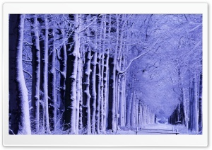 Snowy Trees Ultra HD Wallpaper for 4K UHD Widescreen desktop, tablet & smartphone