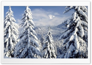 Snowy Trees HD Wide Wallpaper for Widescreen
