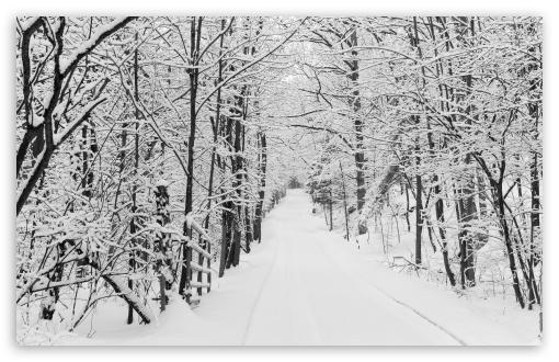 Snowy Trees, Rural Road, Winter UltraHD Wallpaper for Wide 16:10 5:3 Widescreen WHXGA WQXGA WUXGA WXGA WGA ; UltraWide 21:9 24:10 ; 8K UHD TV 16:9 Ultra High Definition 2160p 1440p 1080p 900p 720p ; UHD 16:9 2160p 1440p 1080p 900p 720p ; Standard 4:3 5:4 3:2 Fullscreen UXGA XGA SVGA QSXGA SXGA DVGA HVGA HQVGA ( Apple PowerBook G4 iPhone 4 3G 3GS iPod Touch ) ; Smartphone 16:9 3:2 5:3 2160p 1440p 1080p 900p 720p DVGA HVGA HQVGA ( Apple PowerBook G4 iPhone 4 3G 3GS iPod Touch ) WGA ; Tablet 1:1 ; iPad 1/2/Mini ; Mobile 4:3 5:3 3:2 16:9 5:4 - UXGA XGA SVGA WGA DVGA HVGA HQVGA ( Apple PowerBook G4 iPhone 4 3G 3GS iPod Touch ) 2160p 1440p 1080p 900p 720p QSXGA SXGA ;