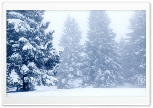 Snowy Trees,  Winter Scenery Ultra HD Wallpaper for 4K UHD Widescreen desktop, tablet & smartphone