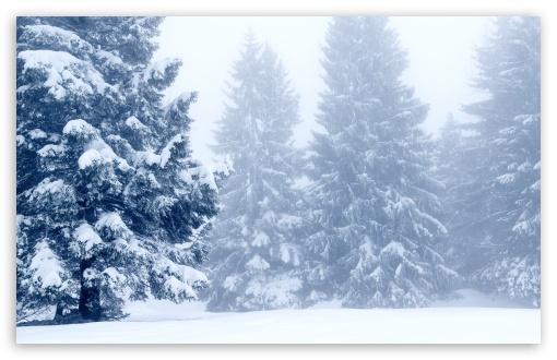 Snowy Trees Winter Scenery Ultra Hd Desktop Background Wallpaper For 4k Uhd Tv Widescreen Ultrawide Desktop Laptop Tablet Smartphone