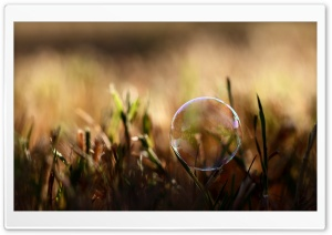 Soap Bubble On Grass HD Wide Wallpaper for 4K UHD Widescreen desktop & smartphone