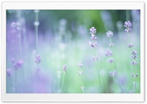 Soft Focus Small Purple Flowers HD Wide Wallpaper for Widescreen